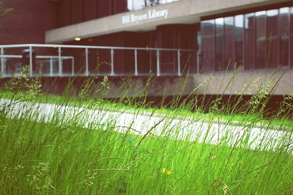 Library Grass