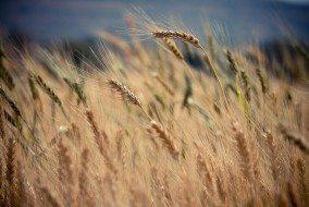 crops-690740_960_720
